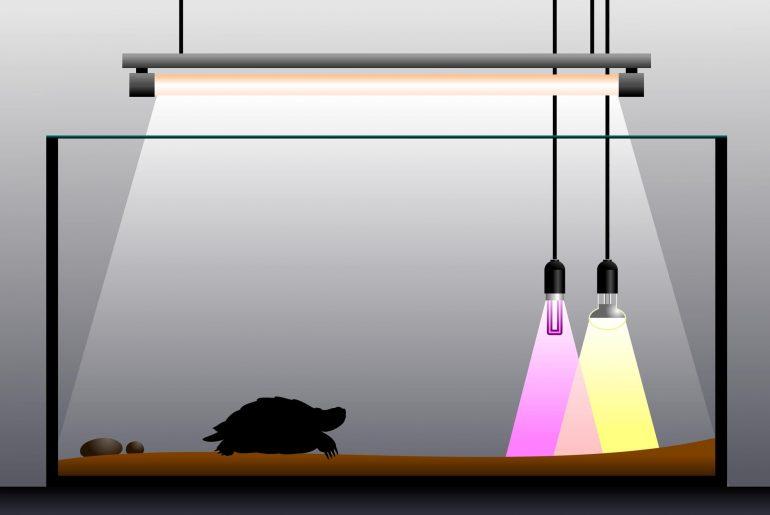 turtle tank price